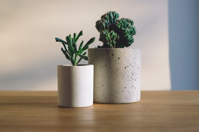 House plants are a great sustainable baby gift idea.